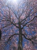 Terreno boscoso misto verde in primavera fotografie stock libere da diritti