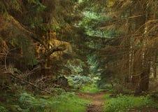 Terreno boscoso molle Fotografia Stock
