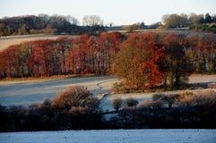 Terreno boscoso nel Cotswolds, Gloucestershire del faggio Immagine Stock