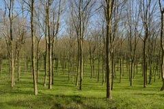 Terreno boscoso in primavera Fotografia Stock