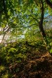 Terreno boscoso sulla riva di Loch Lomond immagine stock