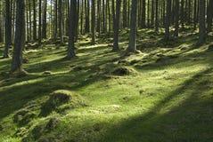 Terreno boscoso Sunlit Fotografia Stock