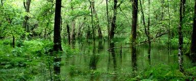 Terreno boscoso verde nel Galles Fotografia Stock Libera da Diritti
