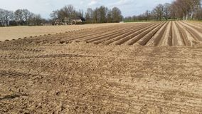 Terreno coltivabile Immagini Stock