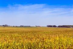 Terreno coltivabile americano Fotografia Stock Libera da Diritti