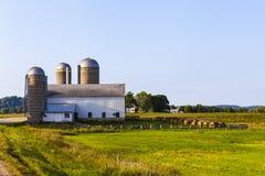 Terreno coltivabile americano Immagini Stock Libere da Diritti