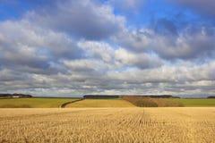 Terreno coltivabile dei wolds di Yorkshire Immagine Stock Libera da Diritti