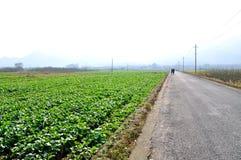 Terreno coltivabile del villaggio di Nanping Fotografie Stock Libere da Diritti