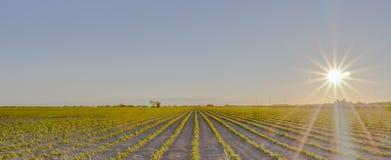 Terreno coltivabile della Columbia Britannica al tramonto Immagini Stock Libere da Diritti