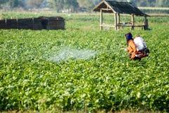 Terreno coltivabile della patata Fotografia Stock Libera da Diritti