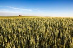 Terreno coltivabile della prateria fotografia stock
