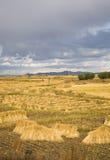 Terreno coltivabile della raccolta Immagini Stock Libere da Diritti