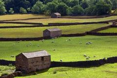 Terreno coltivabile delle vallate del Yorkshire - Inghilterra Fotografia Stock Libera da Diritti