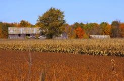 terreno coltivabile di autunno Immagine Stock