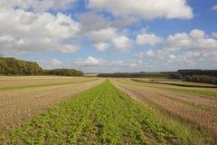 Terreno coltivabile di autunno Immagine Stock Libera da Diritti