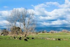 Terreno coltivabile di inverno Fotografia Stock Libera da Diritti