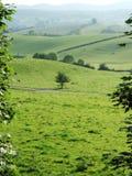 Terreno coltivabile di rotolamento vicino a Kendal Fotografie Stock Libere da Diritti