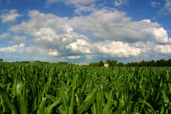 Terreno coltivabile di sparizione (campo di mais e casa con progetto abitativo fotografie stock libere da diritti