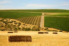 Terreno coltivabile dopo la raccolta Immagini Stock Libere da Diritti