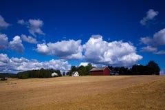 Terreno coltivabile dorato Fotografia Stock