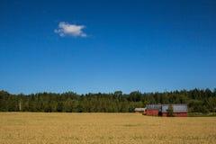 Terreno coltivabile dorato Fotografia Stock Libera da Diritti