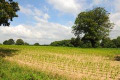 Terreno coltivabile e campi dell'Inghilterra Immagine Stock