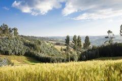 Terreno coltivabile e foresta in Etiopia Immagini Stock Libere da Diritti