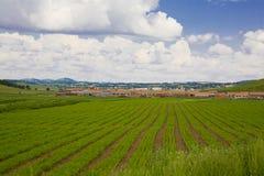 Terreno coltivabile e nube Immagine Stock Libera da Diritti