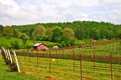 Terreno coltivabile e vigne della sorgente fotografie stock libere da diritti