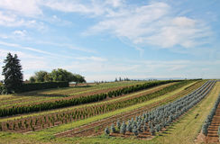 Terreno coltivabile ed i raccolti piantati Fotografia Stock Libera da Diritti