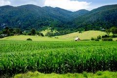 Terreno coltivabile fertile Fotografia Stock Libera da Diritti