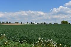 Terreno coltivabile grazioso della Pensilvania Nizza un giorno di primavera immagine stock libera da diritti