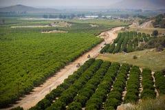 Terreno coltivabile nella sierra colline pedemontana di Nevada fotografia stock
