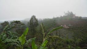 Terreno coltivabile nelle montagne nella nuvola Bali, Indonesia fotografie stock libere da diritti