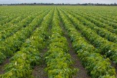 Terreno coltivabile per voi e me Immagini Stock Libere da Diritti