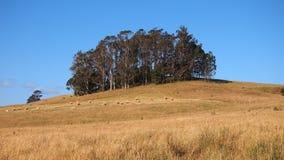 Terreno coltivabile principale, Hay Rolls, Tasmania Fotografia Stock Libera da Diritti