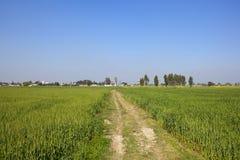 Terreno coltivabile punjabi Immagini Stock