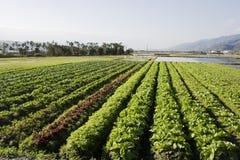 Terreno coltivabile ricco, campo di verdure Fotografia Stock