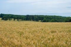 Terreno coltivabile rurale della contea di York Pensilvania del paese, un giorno di estate immagini stock