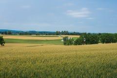 Terreno coltivabile rurale della contea di York Pensilvania del paese, un giorno di estate fotografie stock