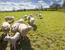 Terreno coltivabile rurale idilliaco, Cotswolds Regno Unito fotografia stock