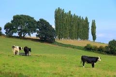 Terreno coltivabile a Somerset Fotografie Stock