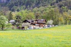 Terreno coltivabile - Svizzera Immagini Stock