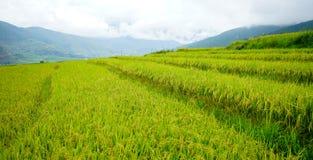 Terreno coltivabile a terrazze con la risaia nel Bhutan Immagini Stock