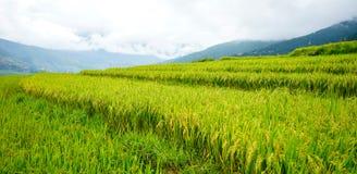 Terreno coltivabile a terrazze con la risaia nel Bhutan Fotografia Stock Libera da Diritti