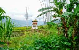 Terreno coltivabile a terrazze nel Bhutan Immagine Stock