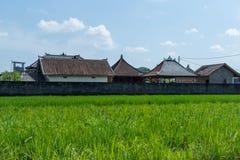 Terreno coltivabile a terrazze verde fertile in Bali Fotografie Stock Libere da Diritti