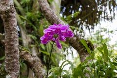 Terreno coltivabile a terrazze verde fertile in Bali Immagini Stock Libere da Diritti