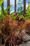Terreno coltivabile a terrazze verde fertile in Bali Immagini Stock