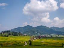 Terreno coltivabile verde nel Nepal immagini stock